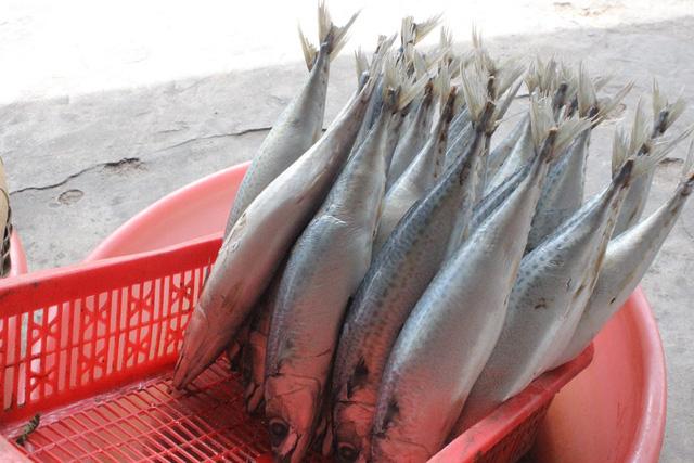 cách rán cá không bị dính chảo