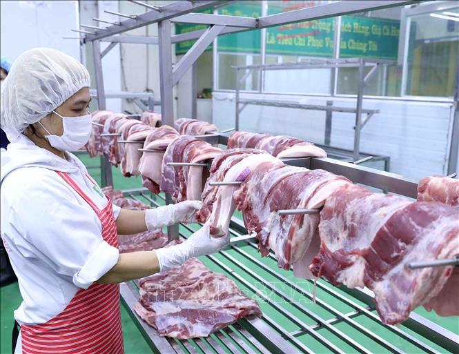 Thịt lợn hơi là gì?